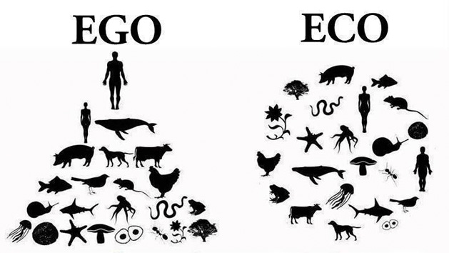 duurzaamheid onze blog (www.frisgroen.nu)